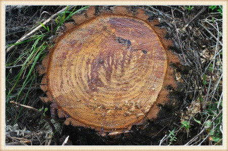 stump-removal-vancouver-wa