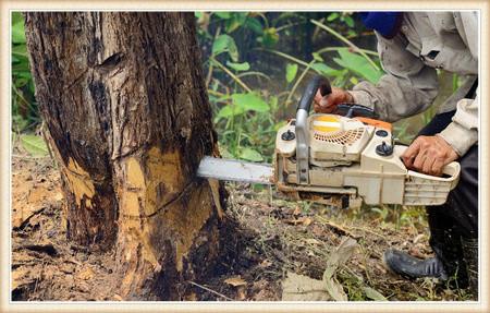 tree-removal-vancouver-wa