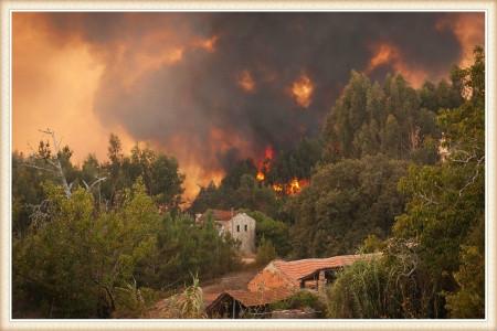wildland-fire-abatement
