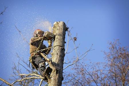 tree service camas wa