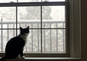 Cat sitting by a snowy window.