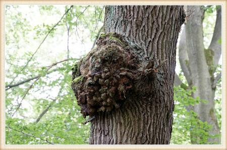 tree-disease-treatment-vancouver-wa