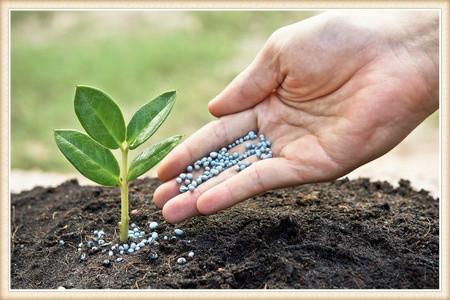 tree-fertilization-vancouver-wa