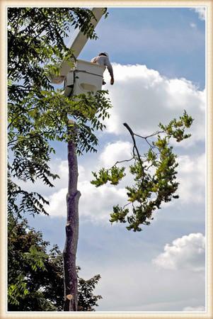 tree-pruning-vancouver-wa