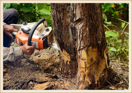 tree-removal-in-vancouver-wa