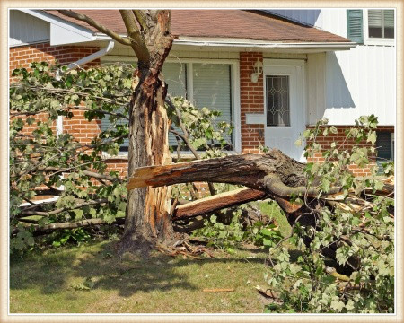 tree-risk-assessment-vancouver-wa