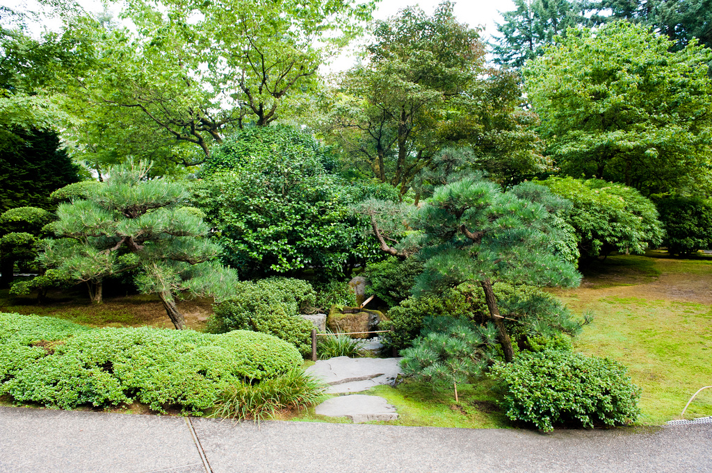 8 Best Places To Buy Trees In Vancouver Ak Timber Services