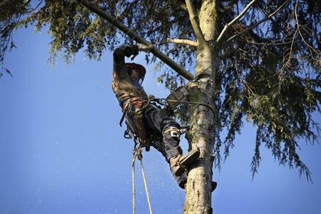tree service washougal wa