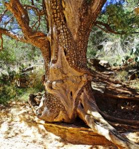 A tree taken by Sudden Oak Death.